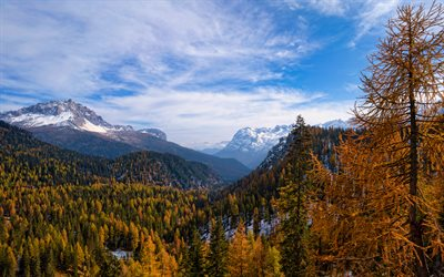 Dolomites, 4k, autumn, forest, South Tyrol, Alps, Italy, mountains, beautiful nature, Europe