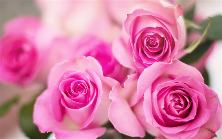 Pink Roses Floral Background Bouquet Of Flowers