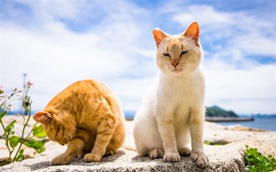 pair of cats, short-haired cats, white cat, pets, red cat, friendship concepts