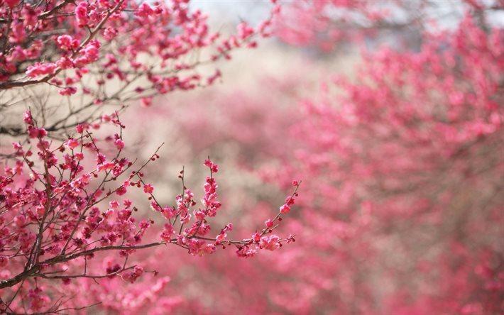 Scarica Sfondi Primavera Sakura Giardino Di Primavera Fiori Rosa