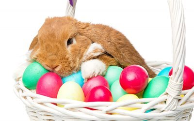 Brown rabbit, easter, cute animals, easter eggs