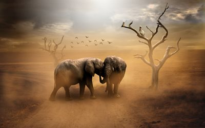 Elephants, Africa, wild animals, desert, evening, sunset, wildlife