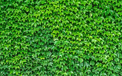 leaf wall, 4k, green leaves, leaf texture, ecology, green background, green leaf wall