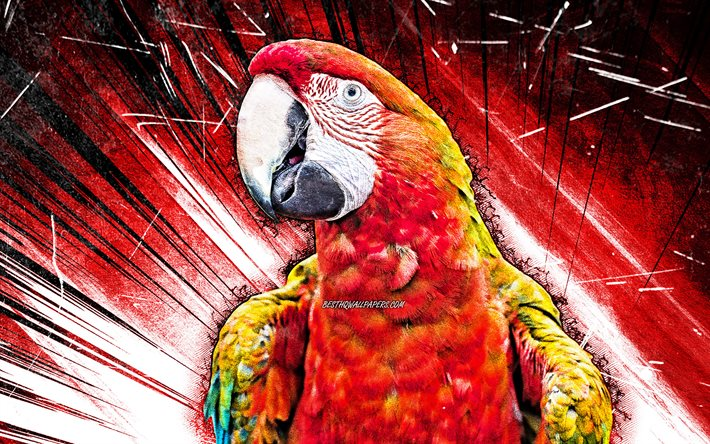 4k, Scarlet macaw, grunge art, red parrot, Ara macao, red abstract rays, creative, parrots, Ara
