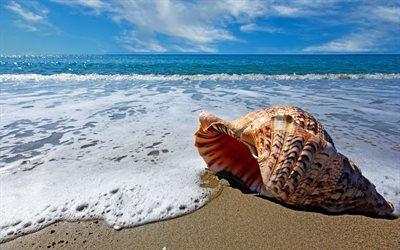 sea, surf, sand, wave, shell