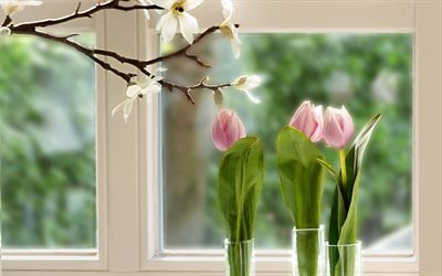 flowers, tulips, sill