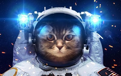 cat, suit, pets, astronaut