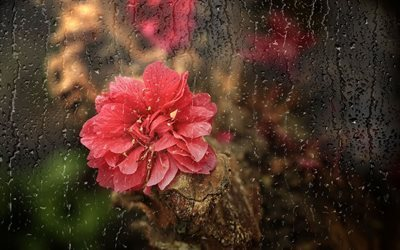 rain, flower, glass