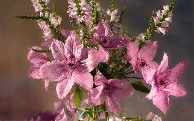 clematis, bouquet, flowers