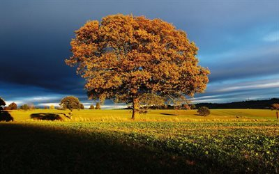 storm clouds, golden autumn, lonely tree