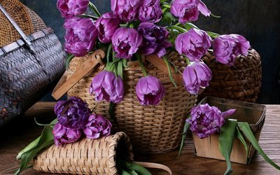 tulips, wicker basket, flowers