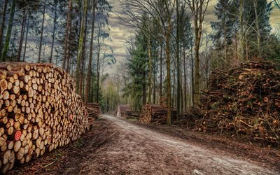 nature, forest, road, logging