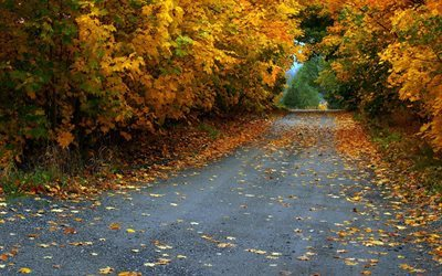 autumn, road, asphalt, leaves