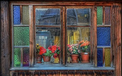 flowers, window, wooden frame, interior, sill