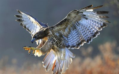 fauna, nature, birds of prey, falcon, falco