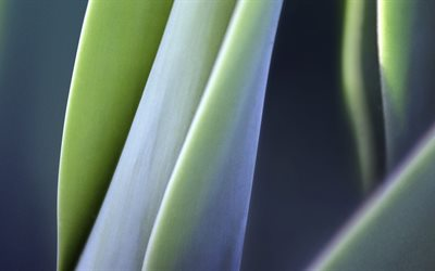 4k, leaves, close-up, plant, nature
