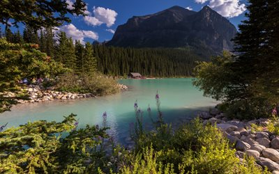 Alberta mountain, mountain lake, forest, summer, evening, mountain landscapeCanada