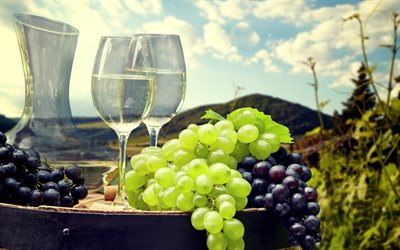 white wine, grapes, vineyard, harvest, fruit, glasses with wine