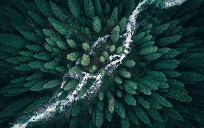 forest, top view, river, dense forest, trees, treetops, mountain river