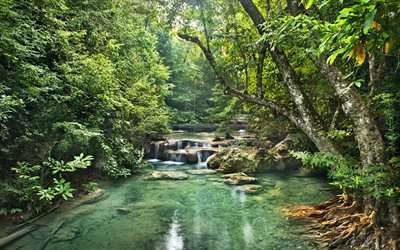 rainforest, river, waterfalls, trees, jungle, forest