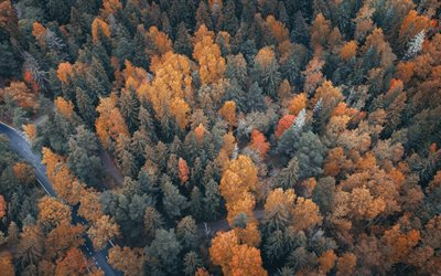 autumn forest, top view, yellow trees, autumn landscape