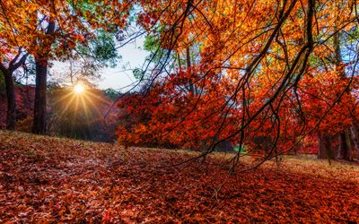 Autumn, 4k, forest, yellow trees, sun rays, beautiful nature