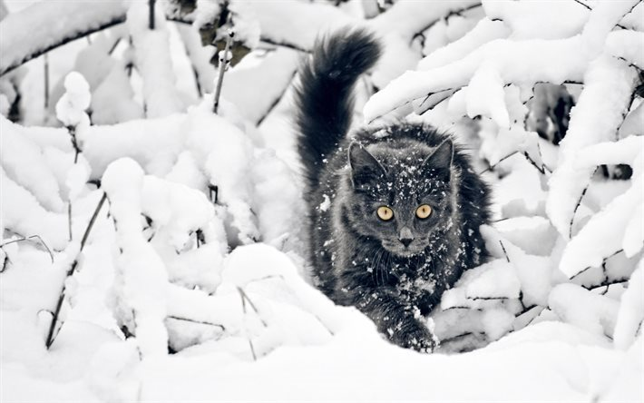 gray cat, winter, snow, forest, cats