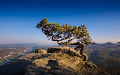 tree in the rock, mountain landscape, peak, Elbe Sandstone Mountains, Czech Republic
