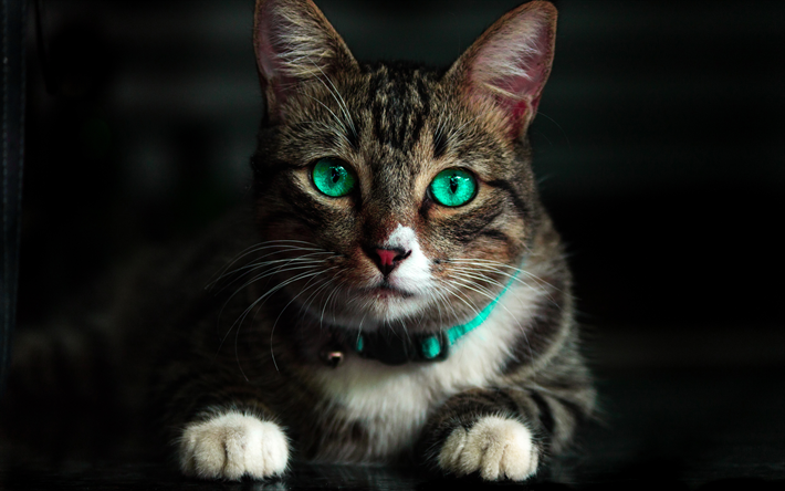 descargar fondos de pantalla 4k american bobtail gato close up de ojos verdes mascotas gato. Black Bedroom Furniture Sets. Home Design Ideas