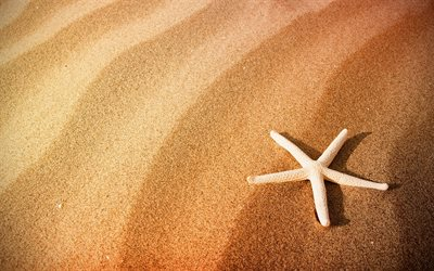 starfish in the sand, evening, sunset, beach, sand, starfish, summer travel concepts