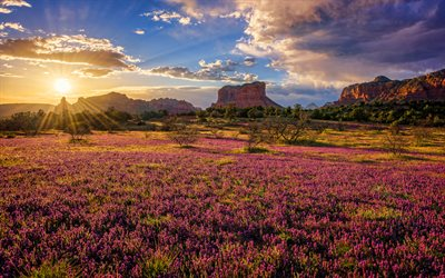 Red Rock State Park, 4k, sunset, desert, beautiful nature, Sedona, Arizona, USA, America, american landmarks