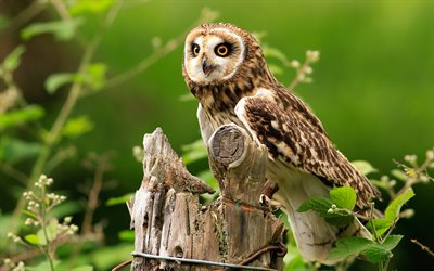 4k, Owl, forest, wildlife, predatory bird, Strigiformes