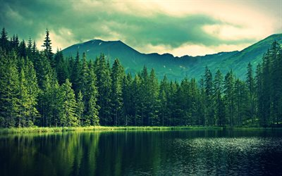 mountain lake, sunset, evening, mountain landscape, forest, summer, green trees
