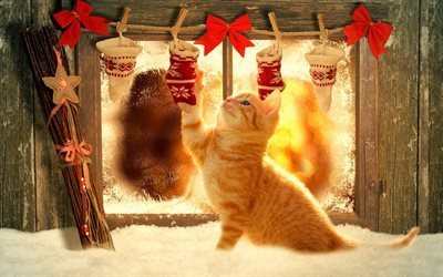 gifts, new year, ginger kitten