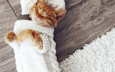 pose, cat-fashion model, knitted sweater