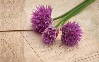 flowers, postcard, allium