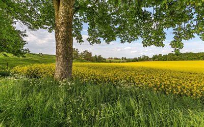 tree, grass, canola field