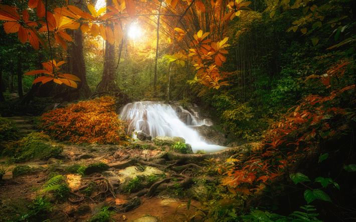 foto de Télécharger fonds d'écran jungle automne cascade de la