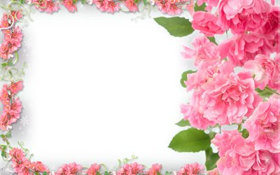 pink flowers frame, 4k, floral concepts, floral frames, white backgrounds, pink flowers