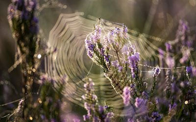 morning, cobwebs, wildflowers, dew, water, purple flowers, field with flowers