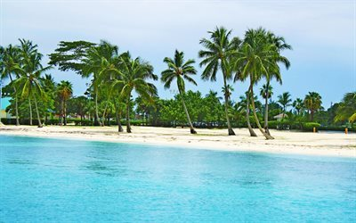 tropical island, beach, sand, palm trees, summer, Bahamas
