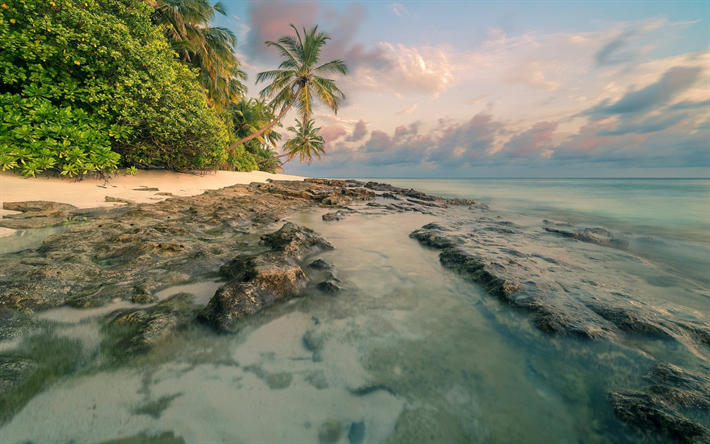 Scarica Sfondi Isola Tropicale Palme Tramonto Spiaggia Sabbia