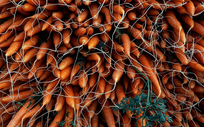 carrots, carrot harvest, vegetables, background with carrots, lot of carrots