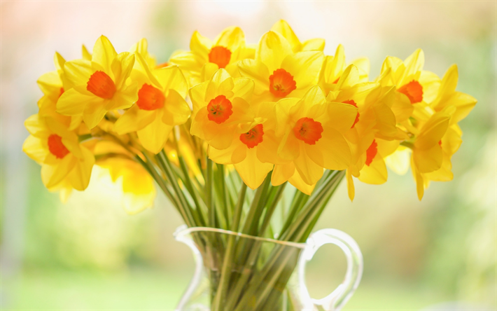 Download wallpapers Daffodils, yellow flowers, spring ...