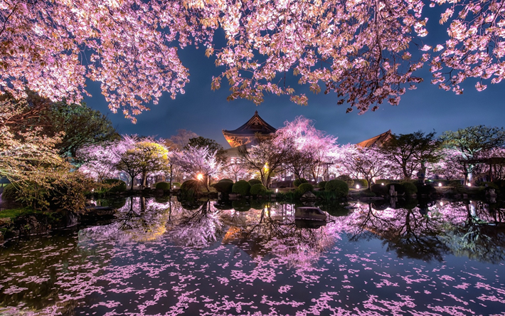Popular Wallpaper Night Japanese Garden - thumb2-cherry-blossom-evening-japanese-temple-spring-pond  Image-655141.jpg