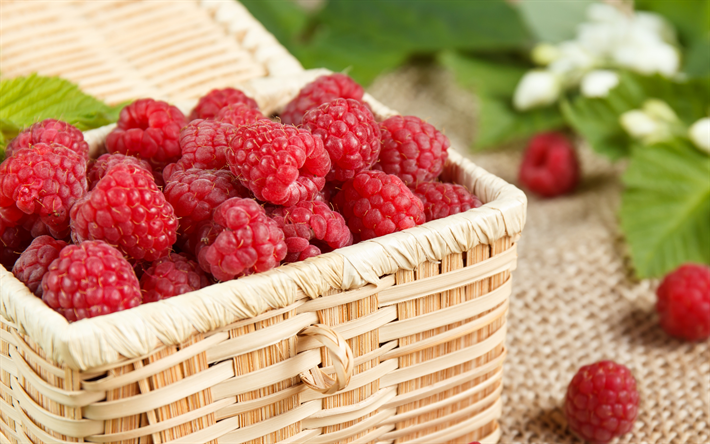 raspberries, ripe berries, raspberries in a basket, red berries