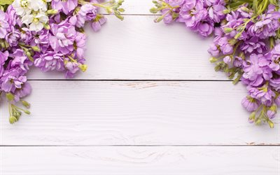 frame of purple flowers, spring frame, white wooden background, wooden texture, spring