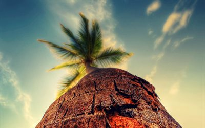 palm, bottom view, summer, blue sky, tropical island, summer travel concepts, tourism