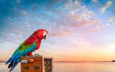 Scarlet macaw, red parrot, macaw, beautiful red bird, traveling concepts, summer, sunset, parrots