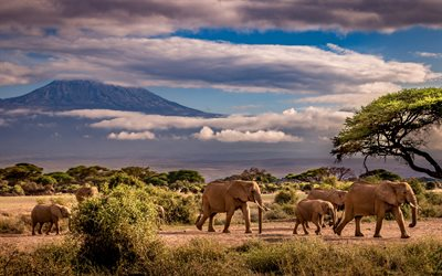 elephants, wildlife, Africa, elephant family, african elephants, mountain landscape
